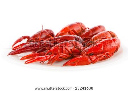 Red crawfish on a white dish - stock photo