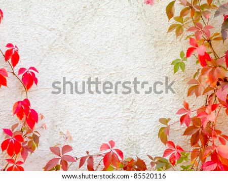 Red creeper plant on a wall creates a beautiful background - stock photo