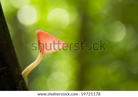 red cup mushroom in bokeh background