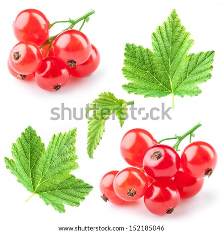 Red currant with leaves. Collection - stock photo