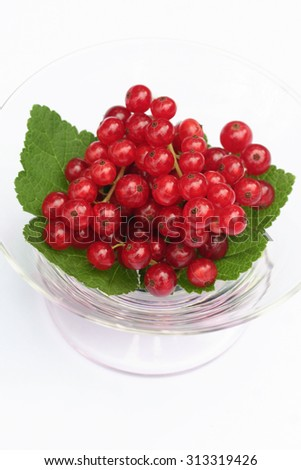 Red currants and green leaves still life isolated on white background