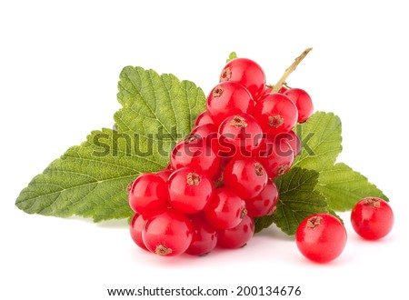 Red currants and green leaves still life isolated on white background cutout