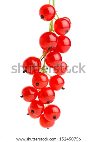 Red currants on white background  - stock photo