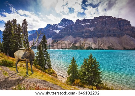 Red deer on the bank of azure lake. Rocky Mountains of Canada - stock photo
