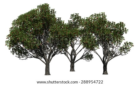 red delicious apple trees - separated on white background