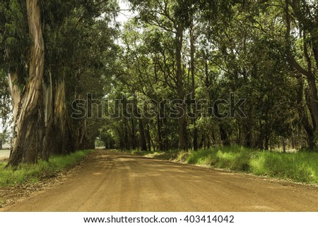 botany bay plantation spooky dirt road stock photo