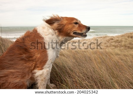 red dog on a windy hillside  - stock photo