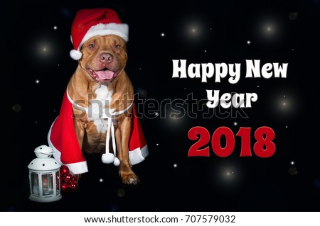 Red dog pit bull in costume of Santa Claus. Postcard with an inscription happy & Red Dog Pit Bull Costume Santa Stock Photo (Royalty Free) 707579032 ...