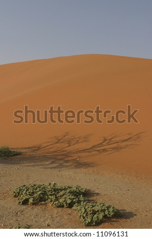 red dune in the namibian desert with a shadow of a tree and some green plants in front - stock photo