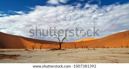 Red dunes of the  dessert in Namibia with fossilised trees