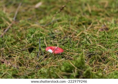 red edible mushrooms - stock photo