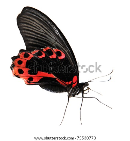 Red exotic butterfly isolated on white background - stock photo