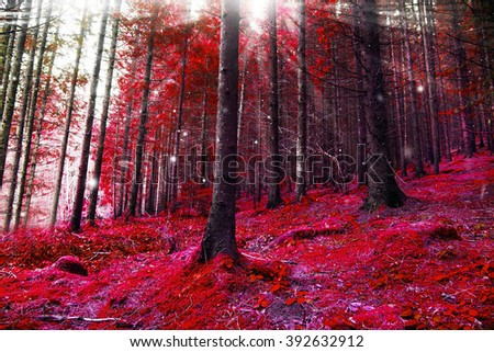 Red fantasy forest with magic lights and sunbeams - stock photo