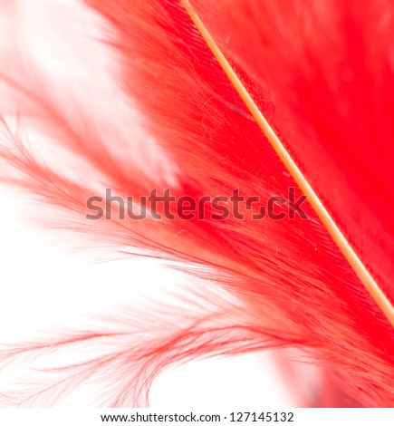 red feather on a white background. macro - stock photo