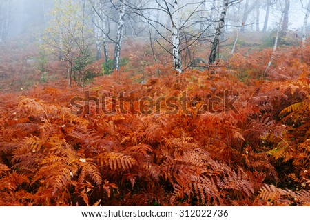 Red Fern in autumn forest. Beauty in nature - stock photo