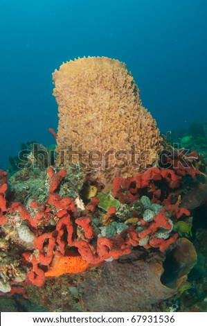 Red Finger Sponges and Barrel Sponges Growing in Close Proximity - stock photo