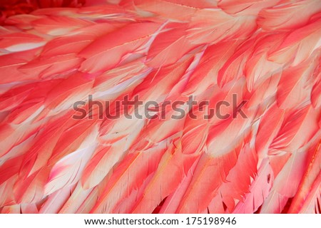 Red Flamingo Feathers - stock photo