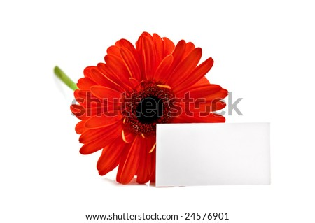 red flower and card isolated