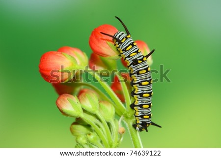 red flower and cute caterpillar - stock photo