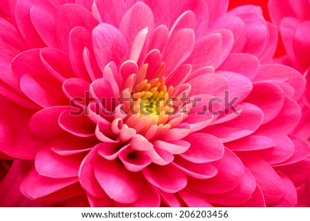 Red flower daisy  close-up background - stock photo