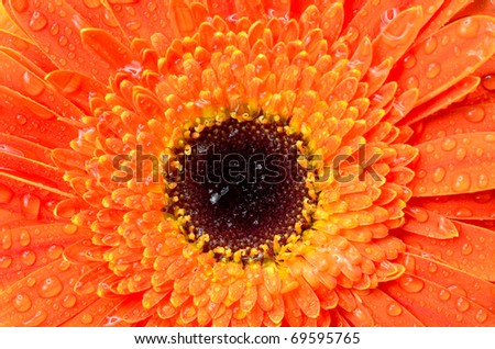 red flower detail - stock photo