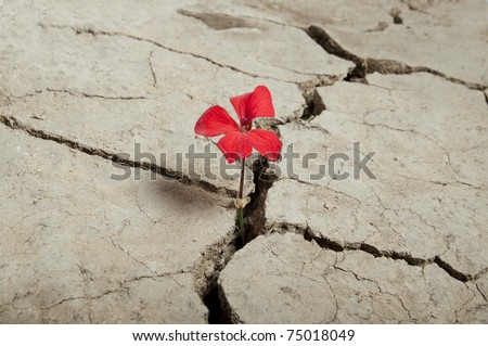 red flower growing out of cracks in the earth