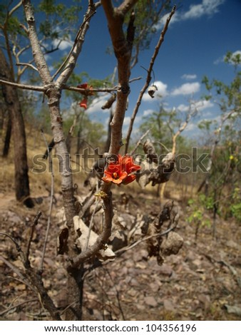 Red flower in a desolated forest after a bush fire - stock photo