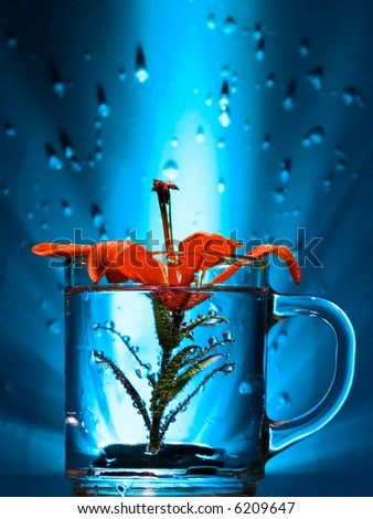red flower in a glass with water-drops on a background - stock photo