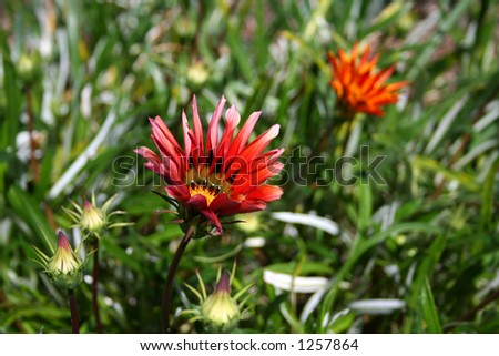 Red flower in green grass - stock photo