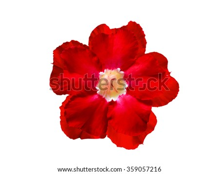 Red  Flower Isolated on White Background.