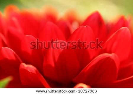 Red flower macro close-up, shallow DOF. - stock photo