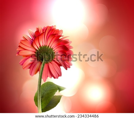 red flower on the abstract background with shining