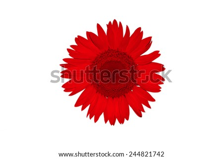 Red flower on white background - stock photo