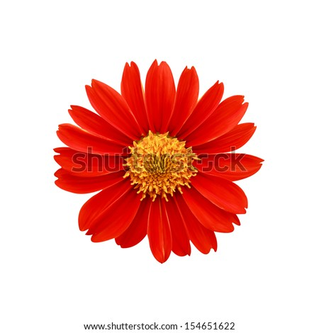 Red flowers , clipping path included - stock photo