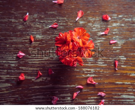 Red flowers geraniums and red petals on a wooden table