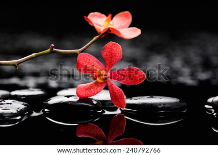 Red flowers on pebbles-wet background - stock photo