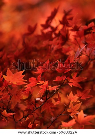 Red foliage - stock photo