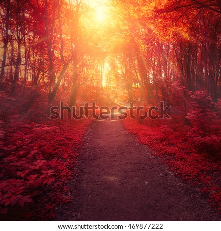 Red forest trees and sun light between branches, Landscape in autumn colors