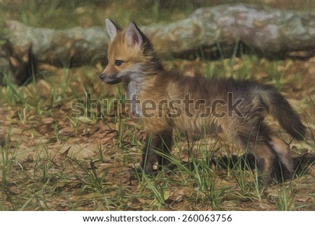 Red Fox Kit - stock photo