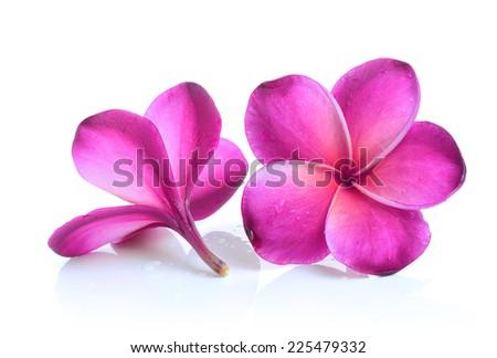 red frangipani flower isolated on white background - stock photo