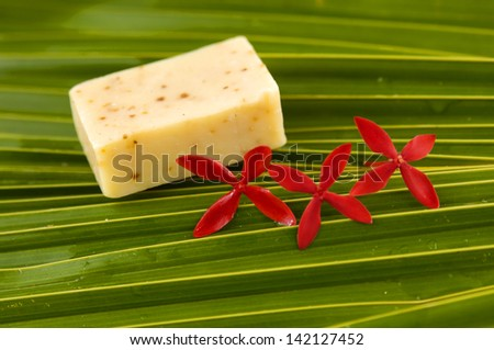 Red frangipani flowers and Green palm - stock photo