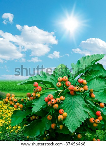 Red fruit. Autumnal botanical gardens on blue sky under the sun. Find more in my portfolio. - stock photo