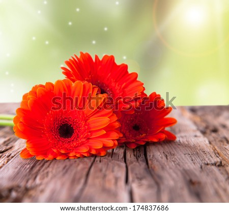 Red gerbera daisies on wood, isolated - stock photo