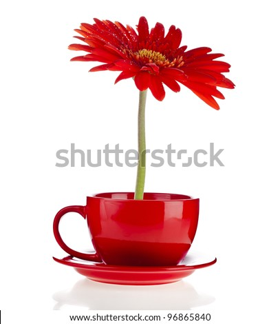 red gerbera flowers  in a cup with copyspace on white background - stock photo