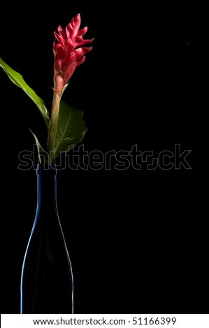 Red ginger flower in silhouetted wine bottle.
