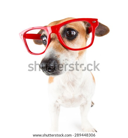 Red glasses dog with a guilty look pressed ears - stock photo