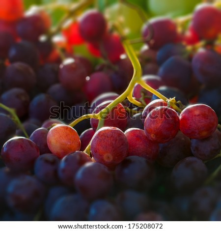 Red globe grapes macro close up square composition - stock photo