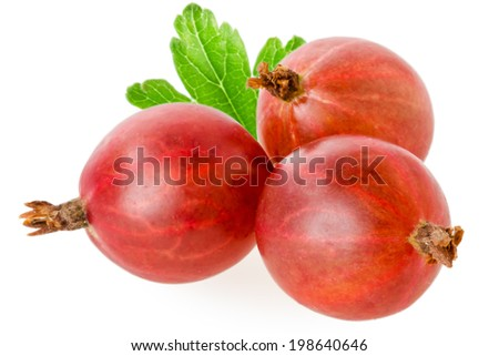 red gooseberries isolated on white - stock photo