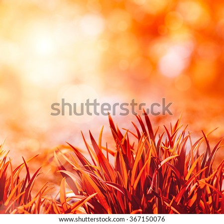 Red grass in sun light. Blurred bokeh on background - stock photo