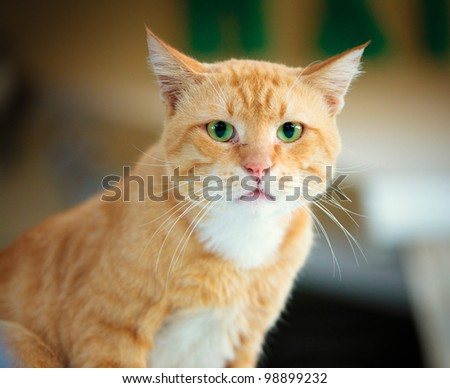 Red Greek stray cat outdoor in nature - stock photo